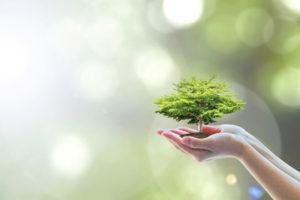 EEG Autark Alternative Energie Baum schützen